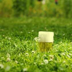 greeting e-card Beer cup with beer in a green meadow