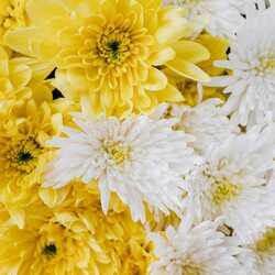Apsveikuma e-kartiņa Dzeltenas un baltas puķes