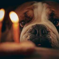 greeting e-card Birthday card with a bulldog