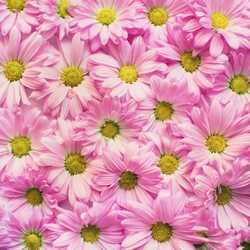 Apsveikuma e-kartiņa Rozā ziedlapiņu ziedu siena