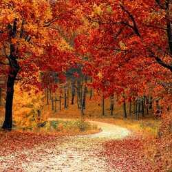 Apsveikuma e-kartiņa Rudenīgs meža ceļš