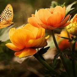 Apsveikuma e-kartiņa Tauriņš lidojumā uz dzeltenu ziedu