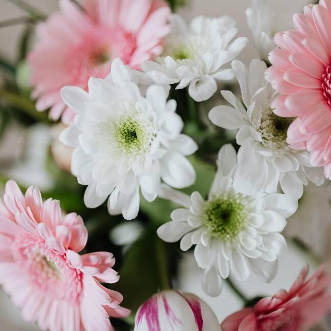 Baltas un rozā puķes e-kartiņa