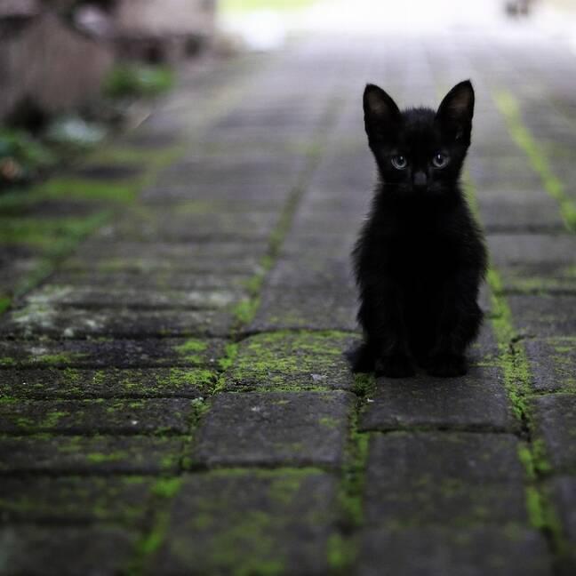 Melns vientuļš kaķēns uz trotuāra e-kartiņa