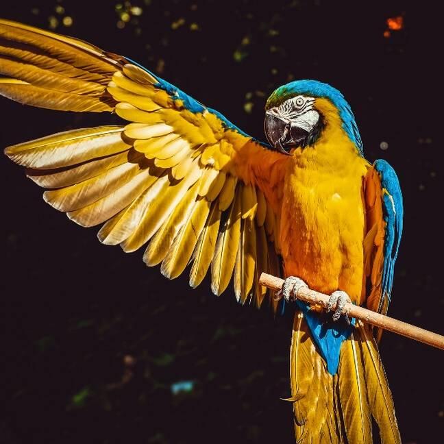 Papagailis uz koka ar atvērtu spārnu e-kartiņa
