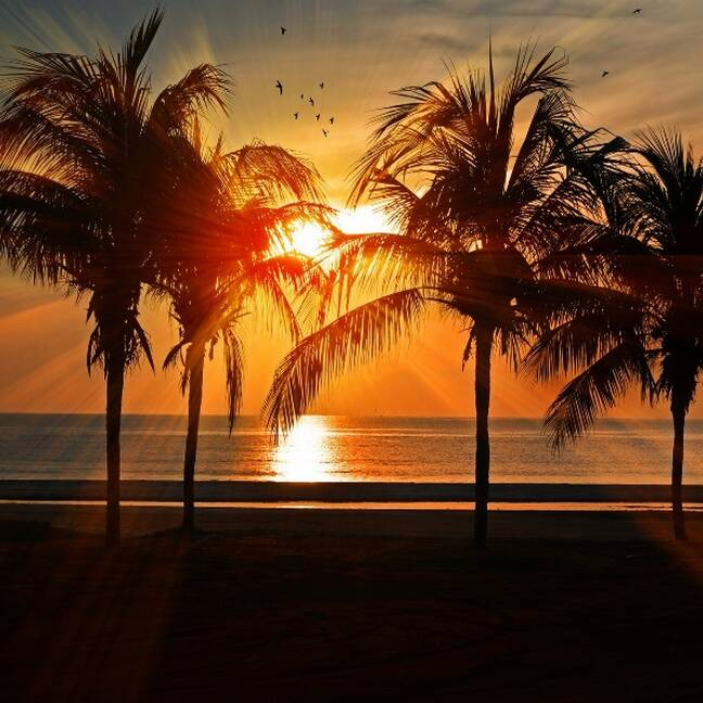 Saulriets pludmalē ar palmām e-kartiņa