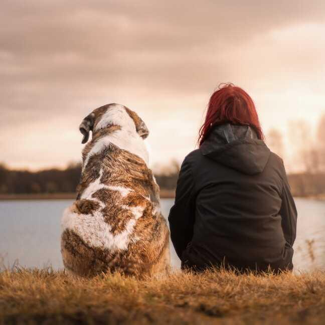 Suns cilvēka draugs e-kartiņa